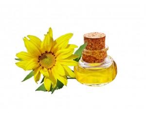 slunečnice olej
