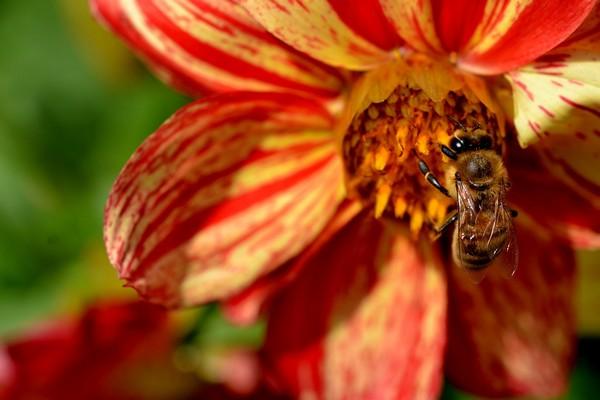 Pozor si dejte i na včely a vosy