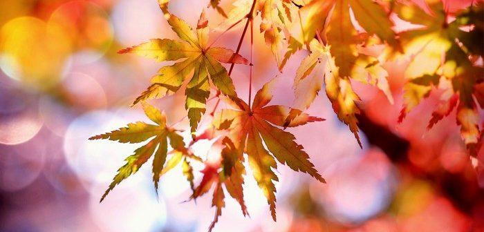 Nedejte podzimnímu splínu ani nepříjemným nemocem šanci