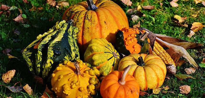 Dýňová semínka jsou plná antioxidantů.