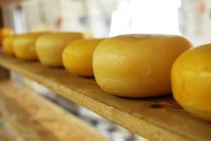 bloky sýra