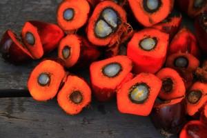 palmová zrna