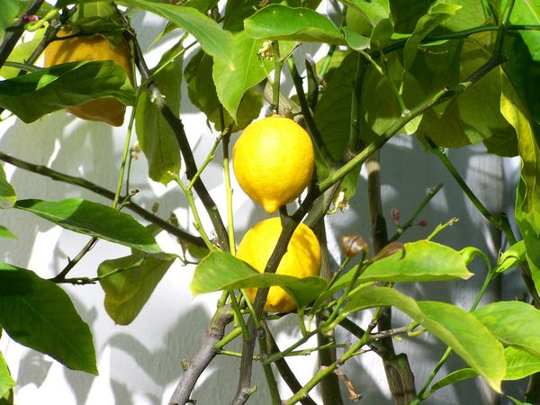 Sůl můžete nahradit například citronem